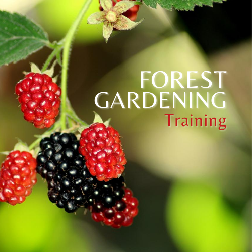 image of the forest gardening training